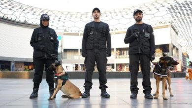 صورة لكلاب البوليسية في شرطة دبي تكشف «كوفيد 19»