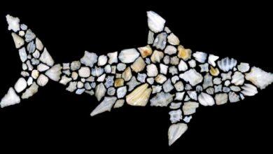 صورة 90 % من أنواع «القرش» اختفت قبل 19 مليون عام