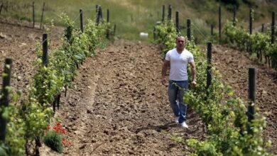 صورة لجنة طوارئ كورونا توافق على استقدام العمالة الزراعية من الخارج