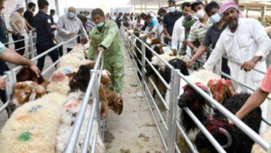 صورة مسالخ تستقبل المضحين طيلة أيام العيد.. وفق الاشتراطات الصحية